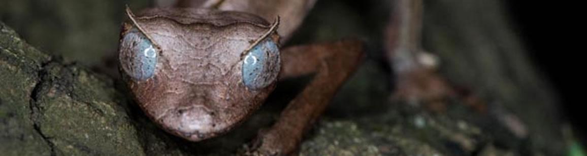 Ausdehnung der Naturforscher Korallenriff und Regenwald 3N/4T - Madagascar Mosaik Reisen
