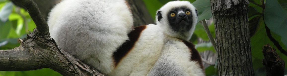 Trocknwald-Ausdehnung der Naturforscher Ankarafantsika NP + KATSEPY: 4N/5T - Madagascar Mosaik Reisen
