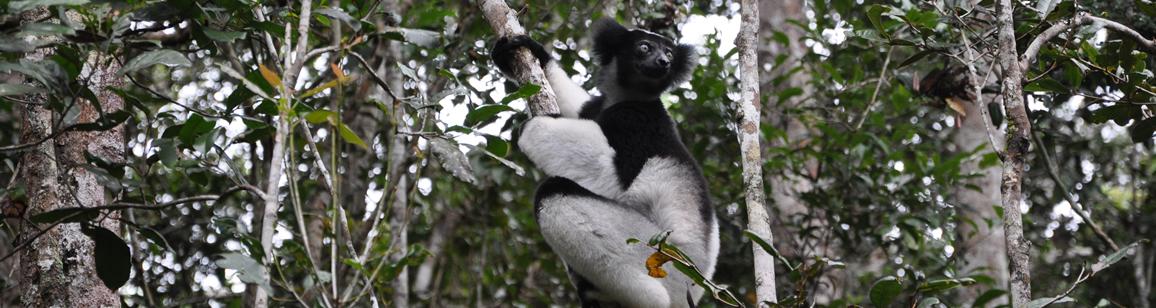 Ausdehnung Andasibe 2N/3T - Madagascar Mosaik Reisen