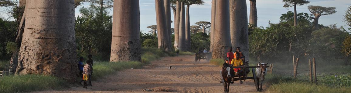 Foto-Tour 11N/12T - Madagascar Mosaik Reisen