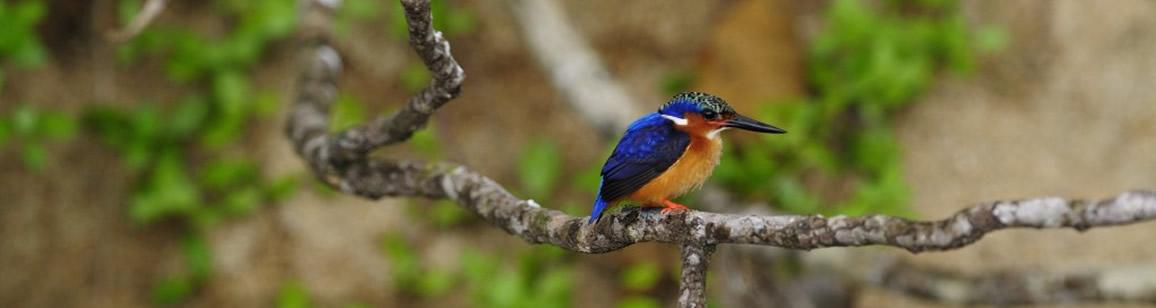 Vogelbeobachtung 11N/12T - Madagascar Mosaik Reisen