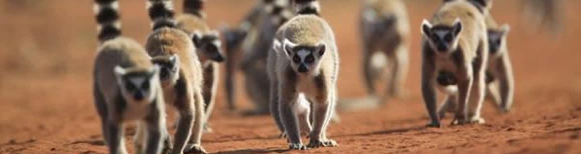 Ausdehnung : Berenty Foto-Rundreisen 4N/5T - Madagascar Mosaik Reisen