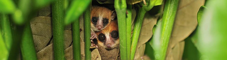 Verhaltenscode vom Ökotourismus - Madagascar Mosaik Reisen