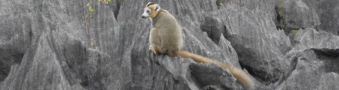 Nordliche Naturrundreisen 6N/7T - Madagascar Mosaik Reisen
