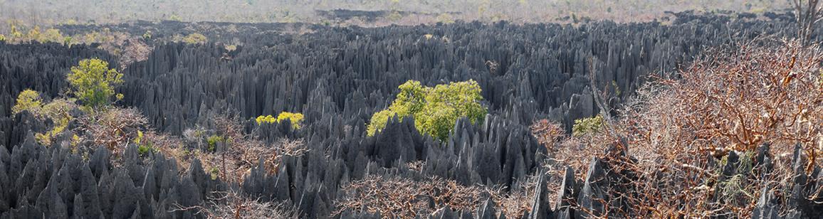Abenteuerreisen 6N/7T - Madagascar Mosaik Reisen